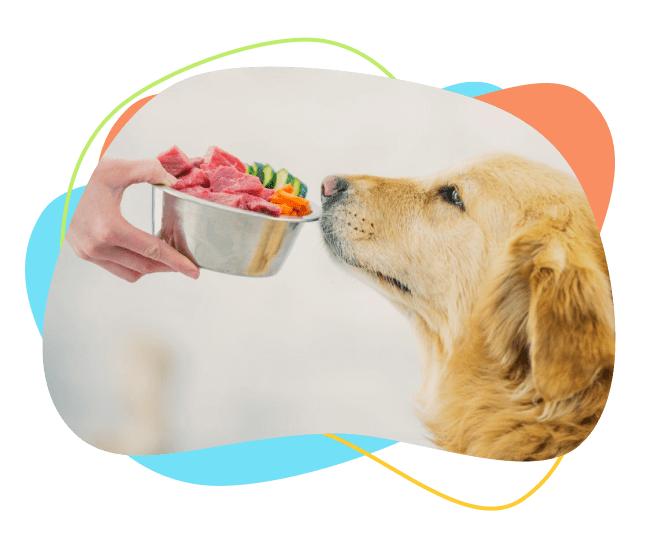برنامه غذایی سگ