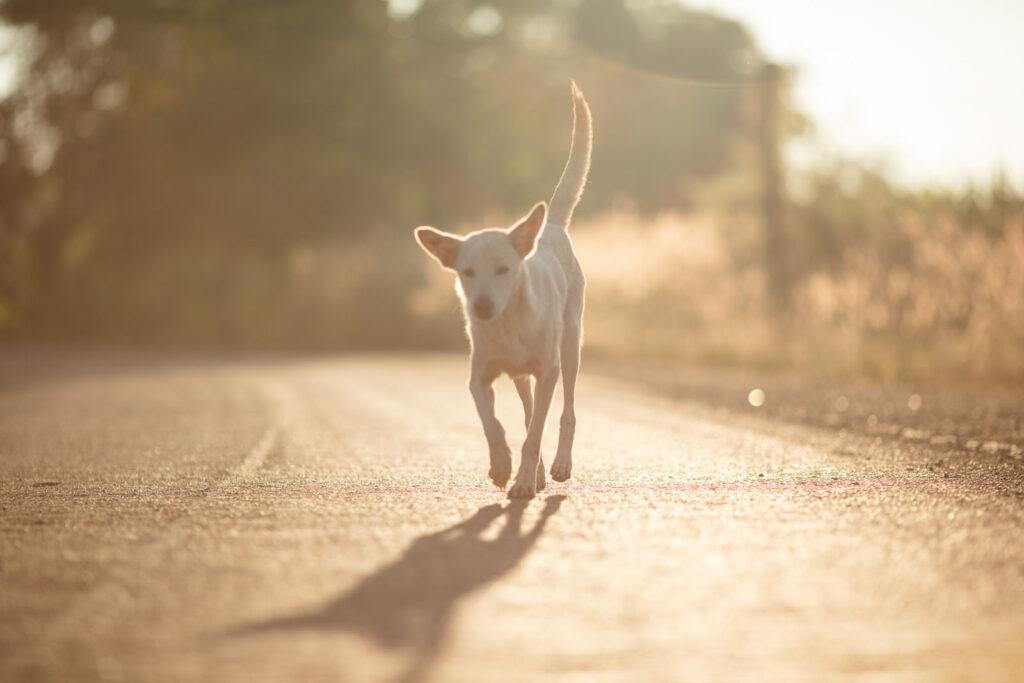 تربیت سگ و کلیدی ترین نکات و آموزش های لازم