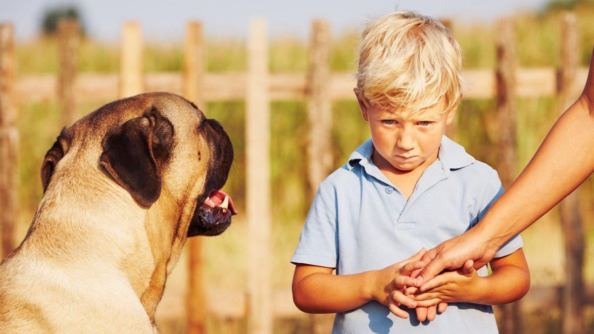 ترس از سگ در کودکان