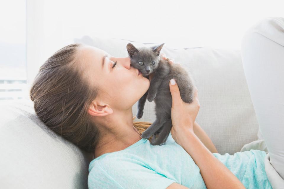 نگهداری از بچه گربه