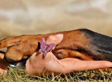 همه چیز درباره سینوفوبیا یا ترس از سگ ها