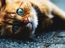 9 نکته طلایی در نگهداری از گربه و پیشگیری از بیمار شدن او