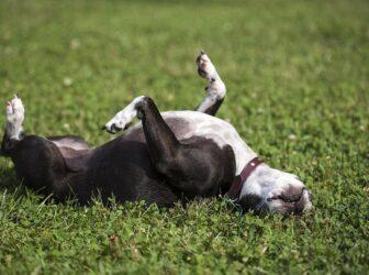 ۷ نکته مهم و طلایی در نگهداری از سگ (چگونه سگی همیشه سالم داشته باشیم)