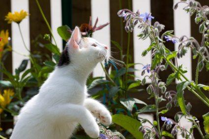 گربه و گل