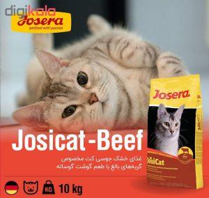 غذای خشک گربه جوسرا
