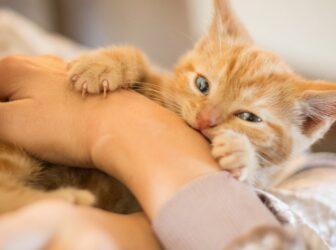 احساس گربه به صاحبش چیست؟ (آیا گربه صاحبش را میشناسد؟)
