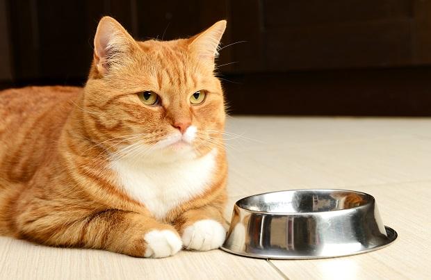 گربه بدغذا