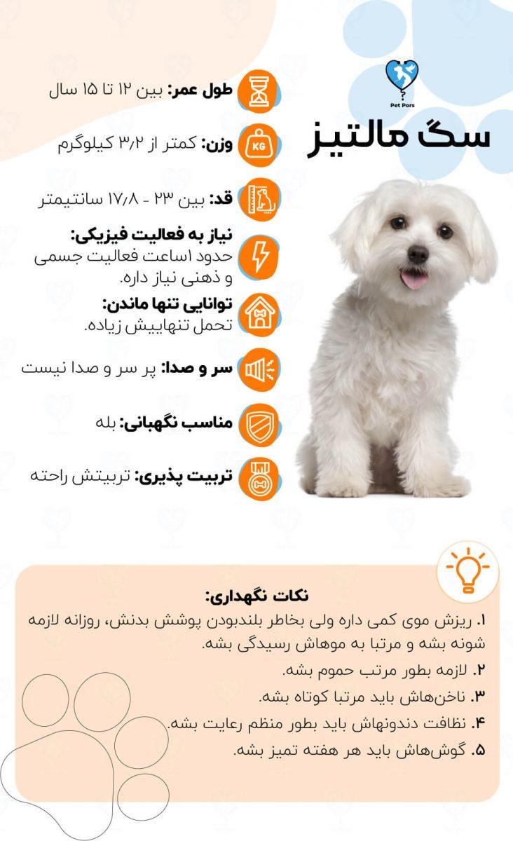 ویژگی های نژاد سگ مالتیز و نکات نگهداری از آن