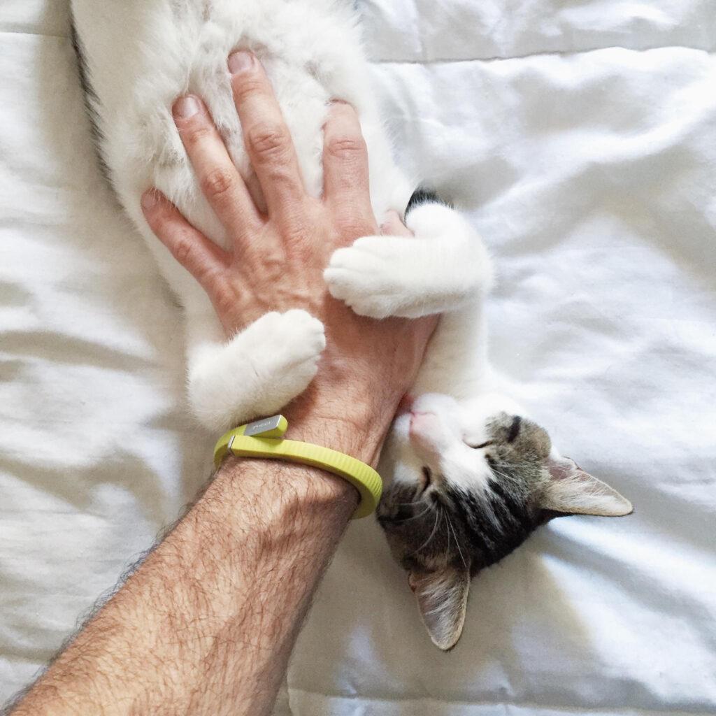 عکس گربه بامزه