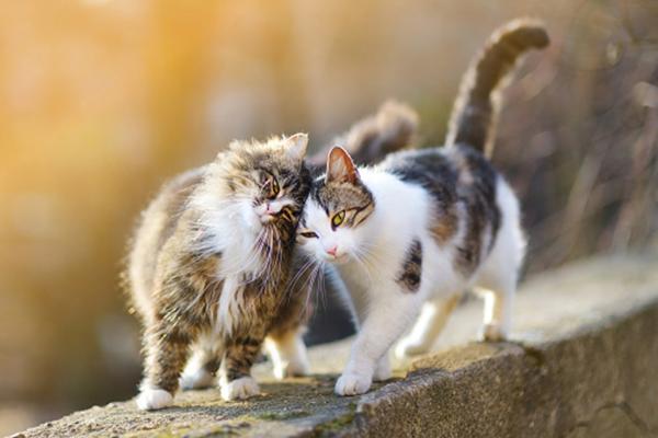 رفتارشناسی گربه