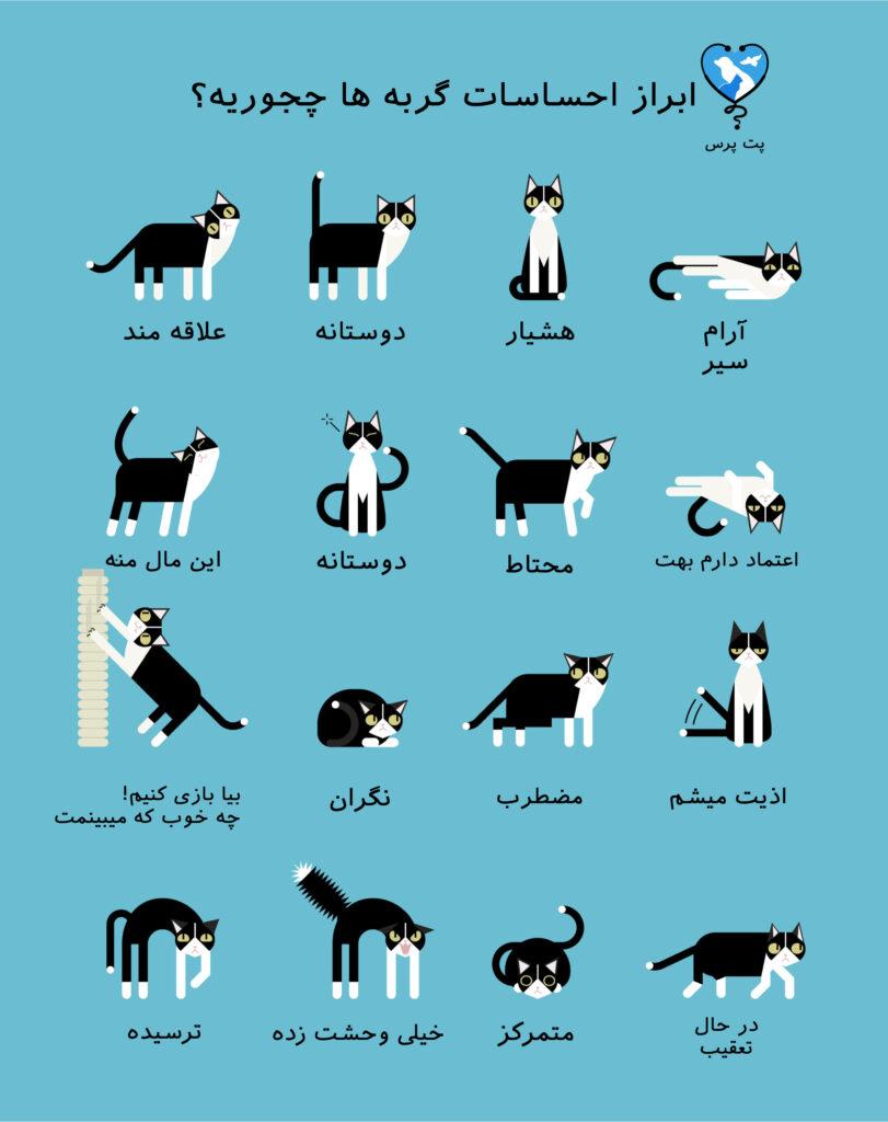 اینفوگرافیک زبان گربه ها