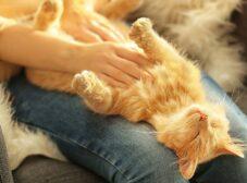 راهنمای کامل معنی صداها و حرکات گربه ها +اینفوگرافیک