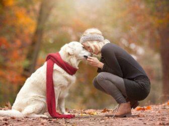 راهنمای کامل خرید سگ (با دونستن نکات ریز و کاربردی، هوشمندانه سگ بخریم)
