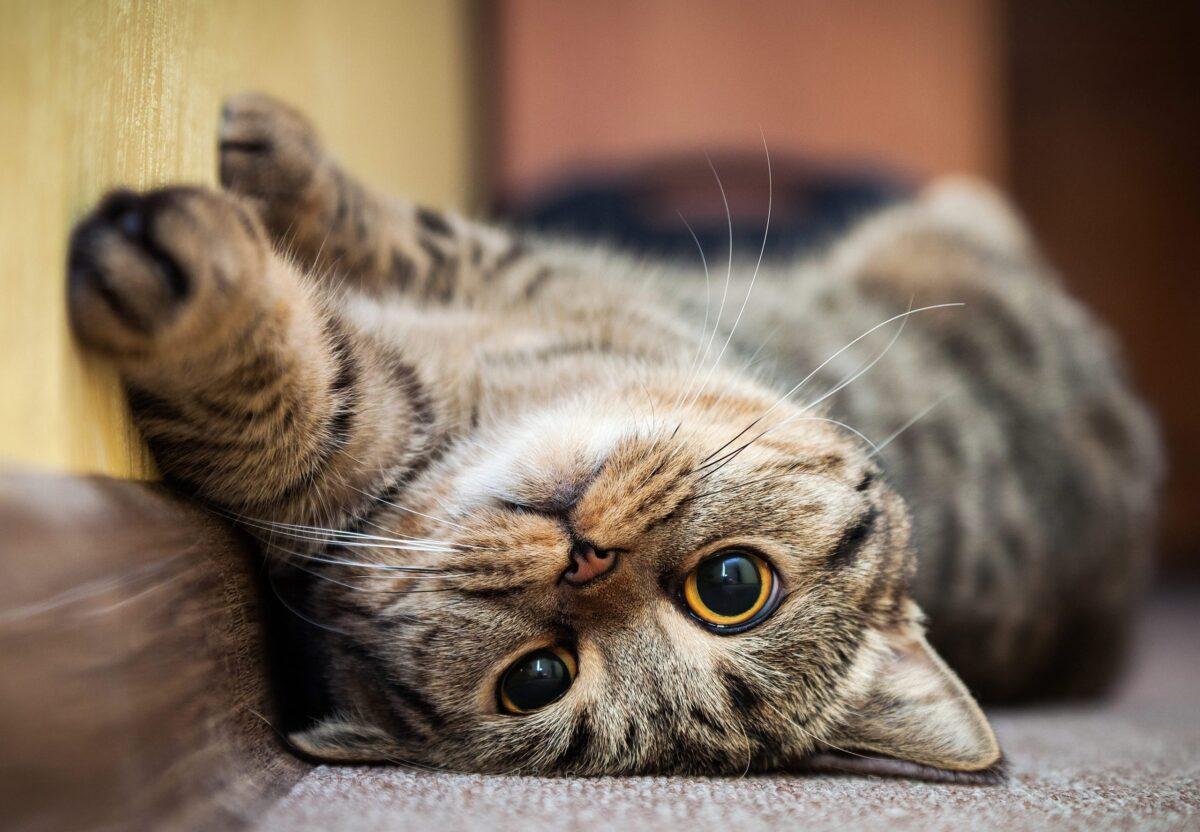 معنی حرکات گربه