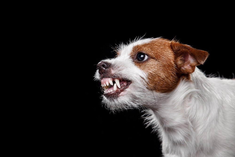 سگ عصبانی