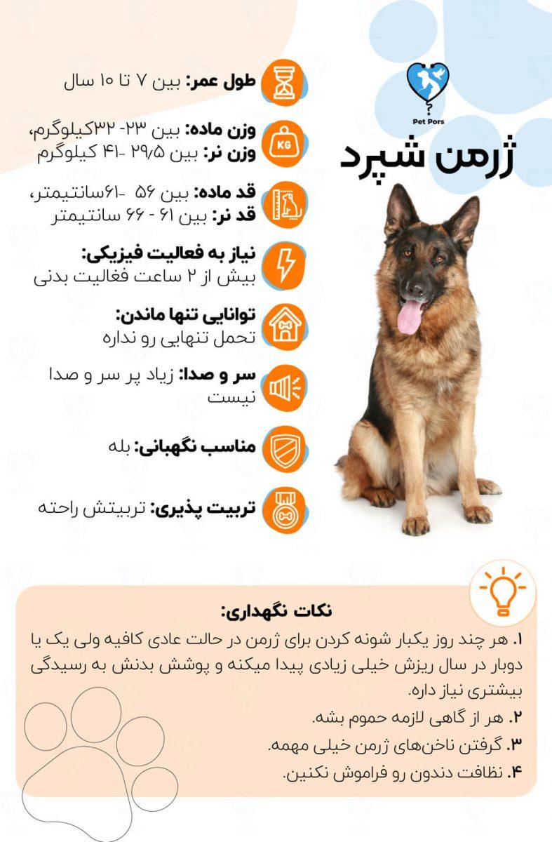 ویژگی های سگ ژرمن شپرد و نکات نگهداری از آن