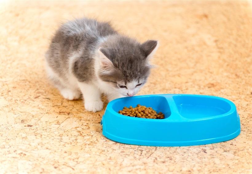 غذای برای بچه گربه دو ماهه