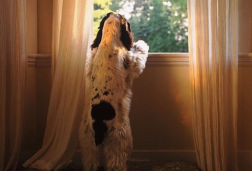 سگ تنها