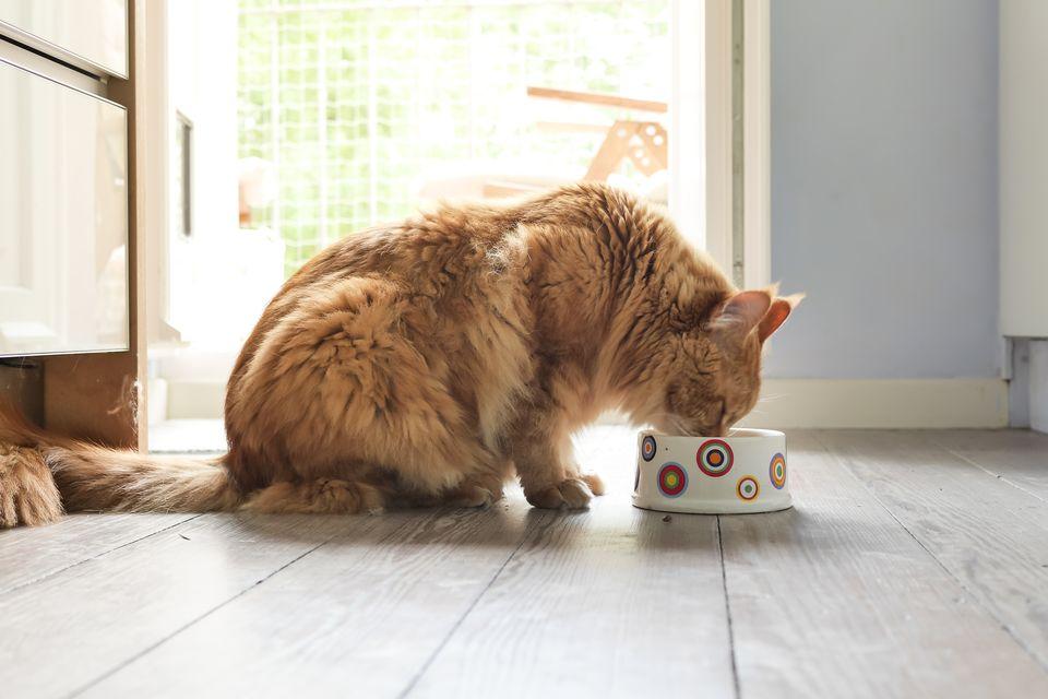 غذا خوردن گربه