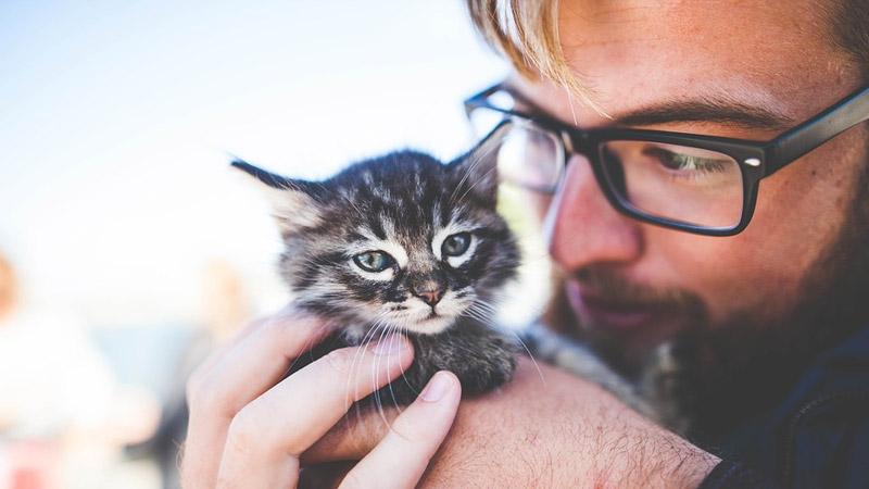 بیماری گربه به انسان