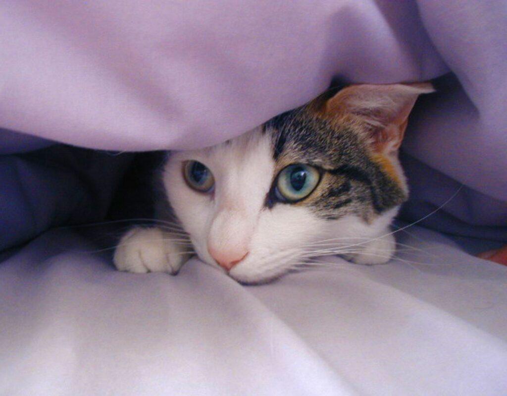 گربه ترسو