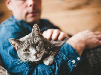 بررسی علت و درمان بی حال بودن گربه (آیا گربه من بیمار است؟)