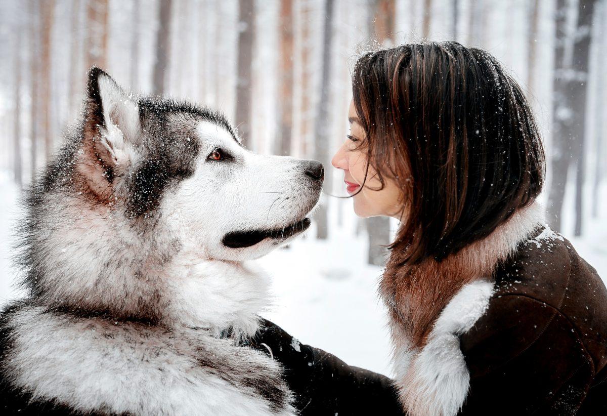 مراقبت از سگ هاسکی
