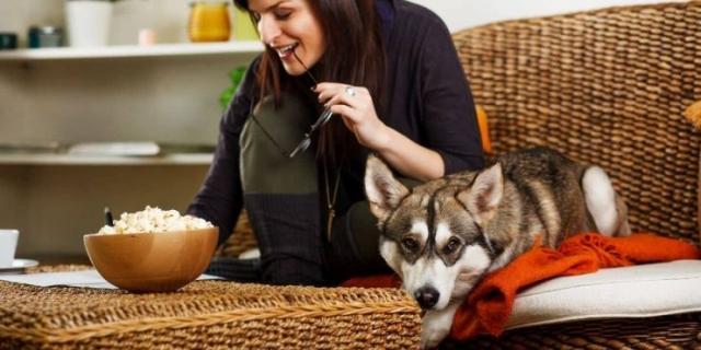 نگهداری سگ هاسکی در خانه
