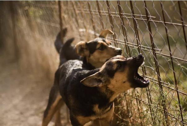 سگ پرخاشگر