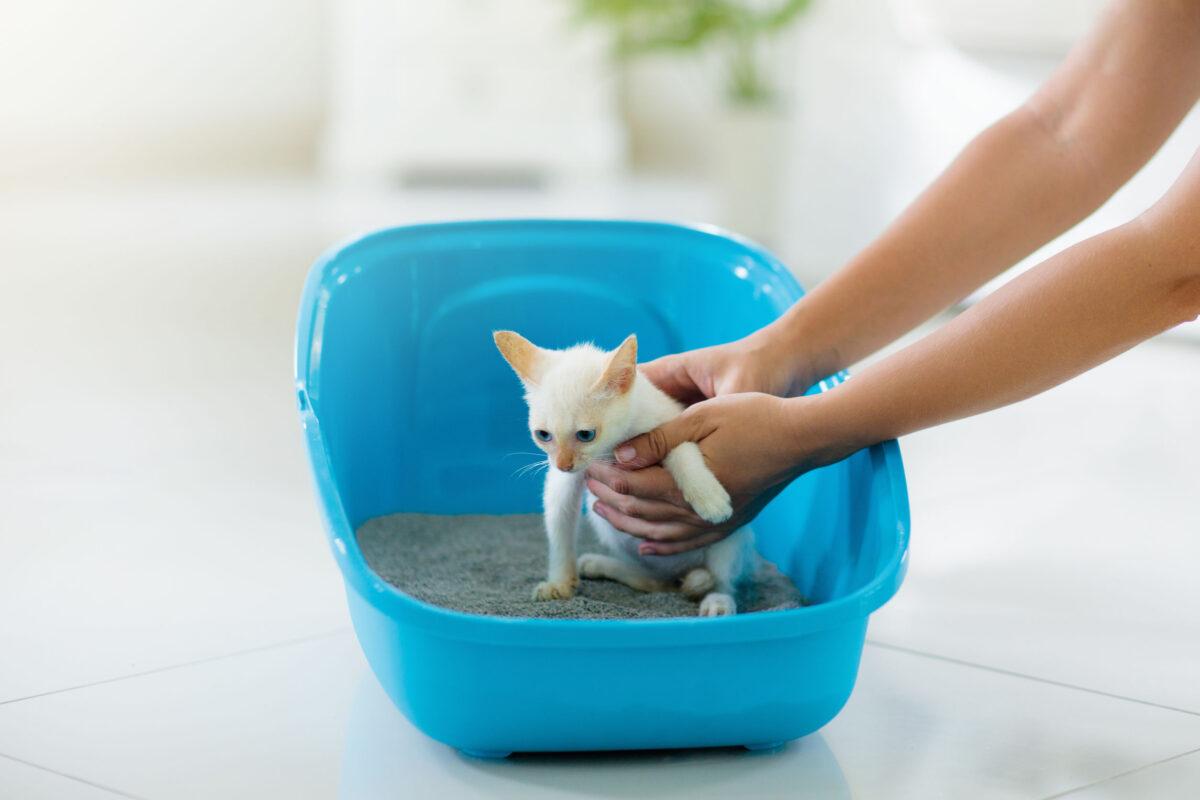 آموزش دستشویی به بچه گربه