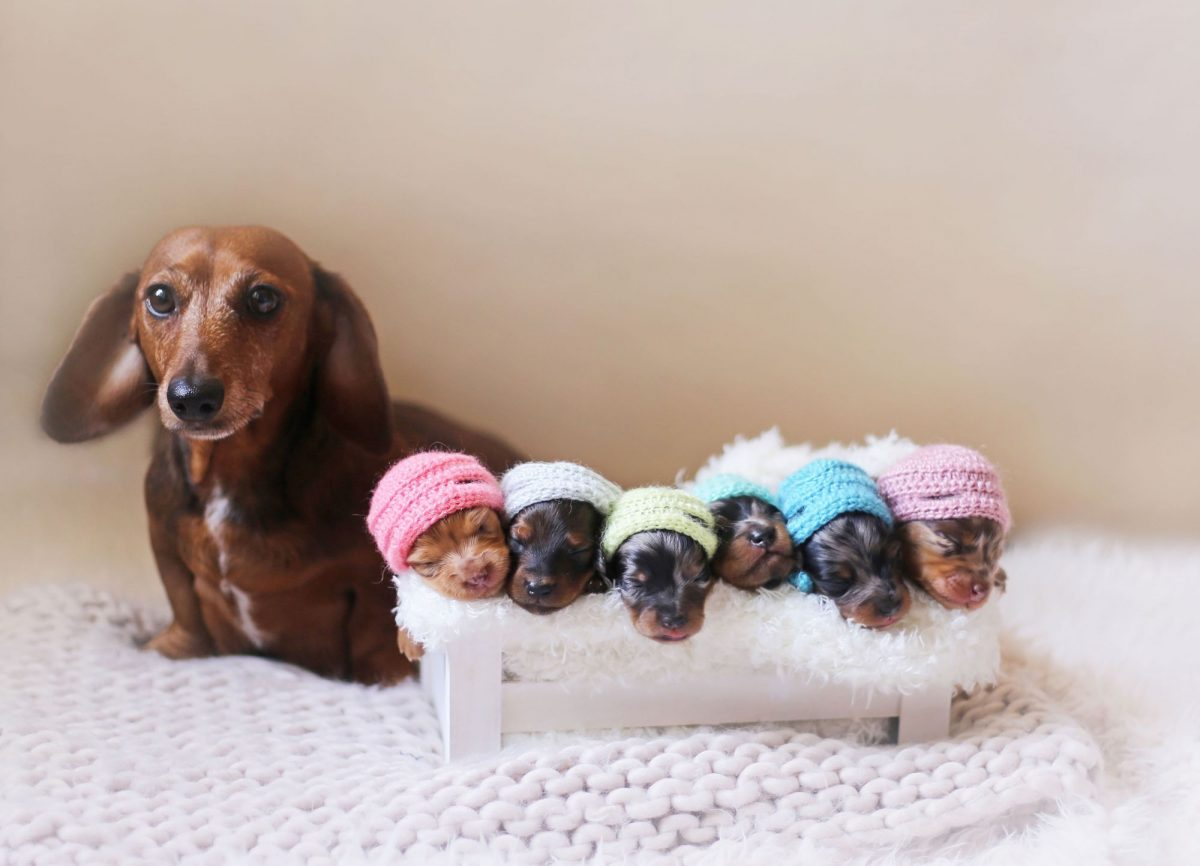 توله سگ تازه به دنیا آمده