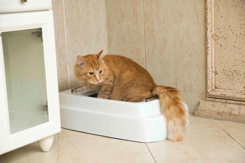 دستشویی کردن گربه در ظرف خاک