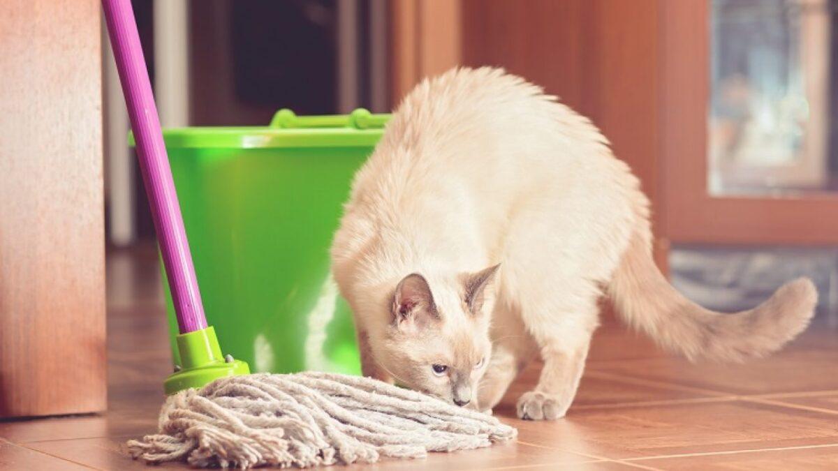 از بین بردن بوی ادرار گربه