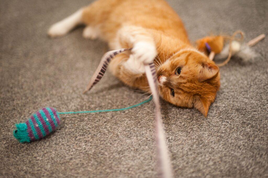 بازی گربه