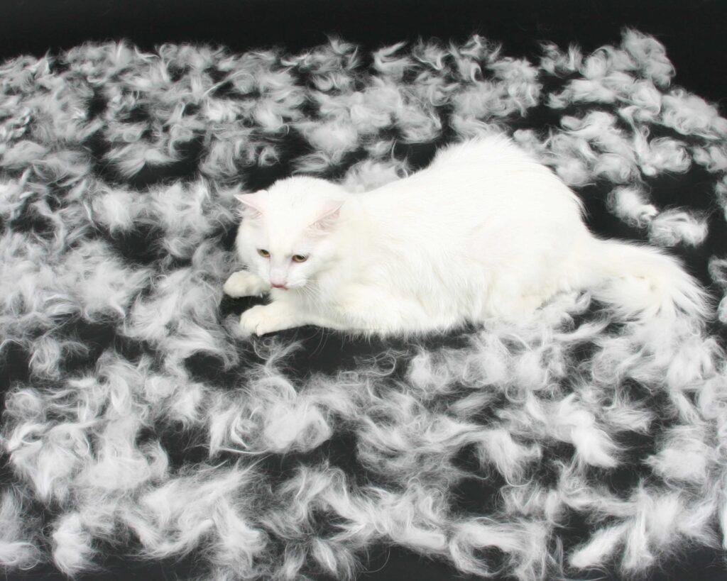 ریزش مو گربه