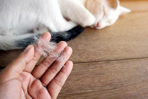 ریزش مو در گربه