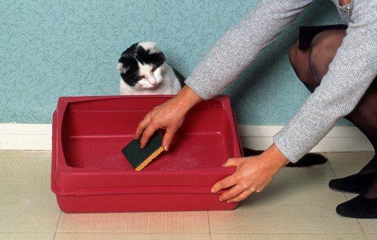 دستشویی نکردن گربه در ظرف خاک