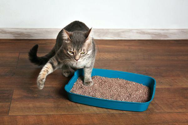 دستشویی کردن گربه در خانه