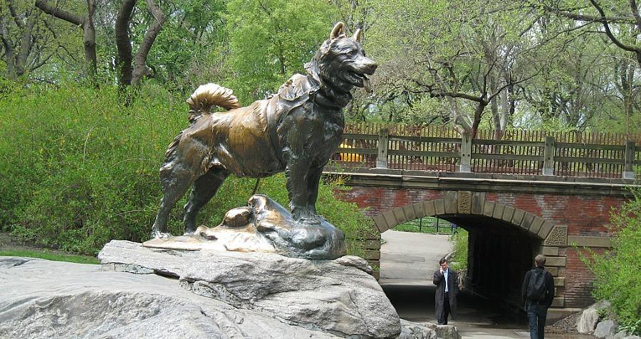 سگ هاسکی قهرمان
