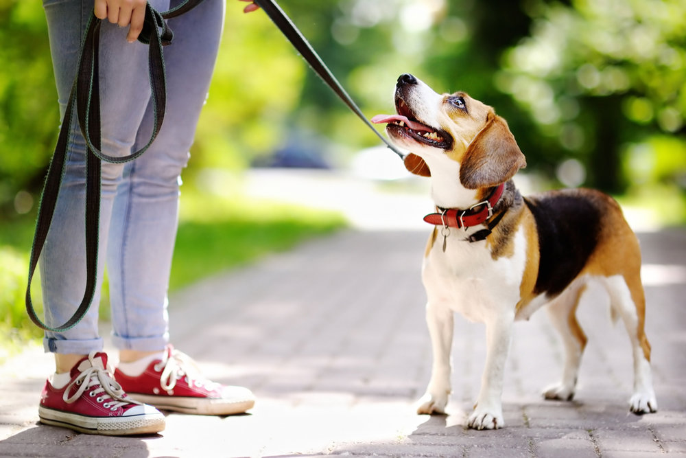 آموزش به سگ