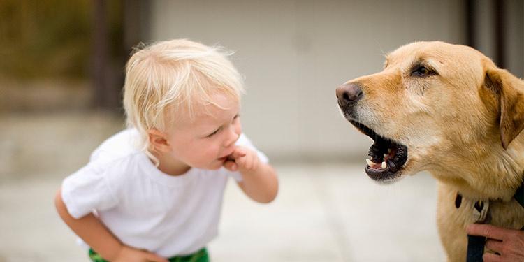 دلایل پارس سگ
