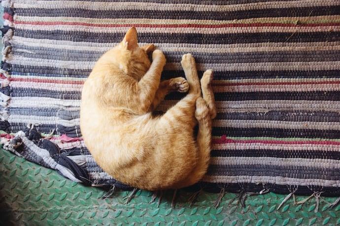 خواب گربه