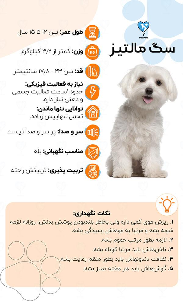 اینفوگرافی معرفی سگ Maltese