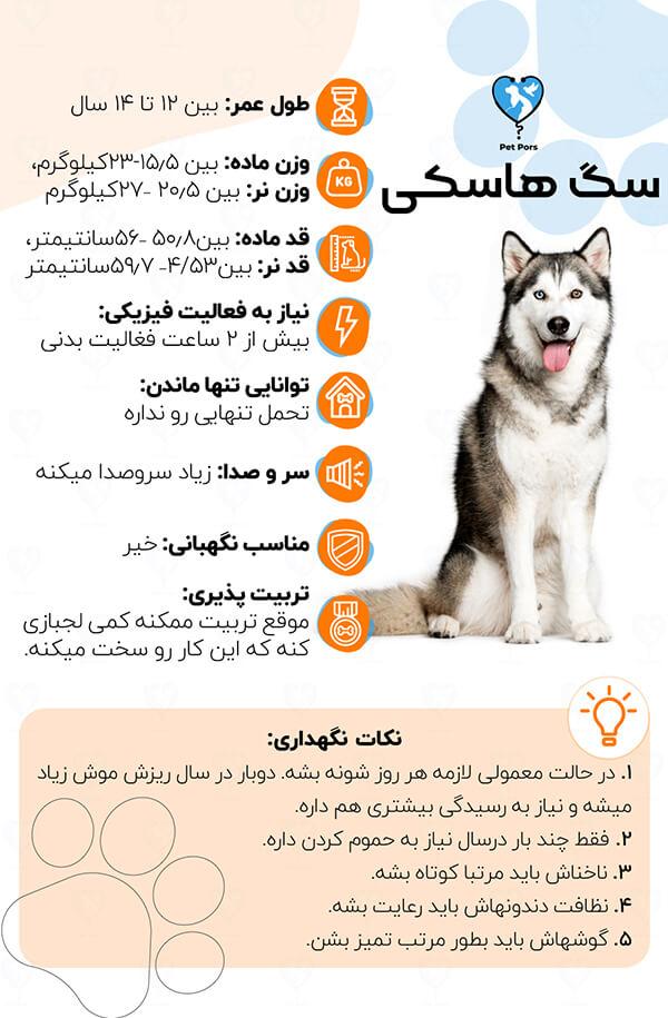 اینفوگرافی معرفی سگ husky