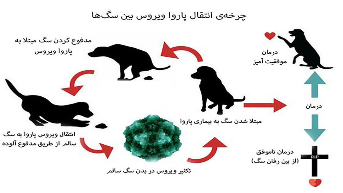چرخه انتقال پاروا در سگ ها