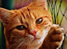راهنمای کامل بیماری کلسی ویروس گربه ها + علائم، درمان و پیشگیری