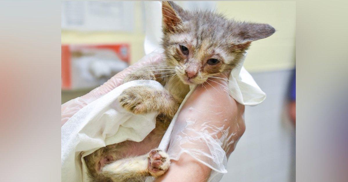بچه گربه مریض