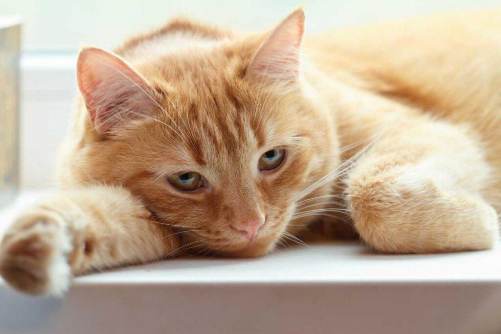 بیماری گربه ها