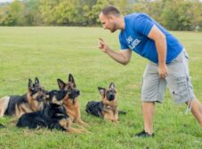 مربی سگ چه ویژگی هایی باید داشته باشد و چطور یک مربی سگ خوب پیدا کنیم؟