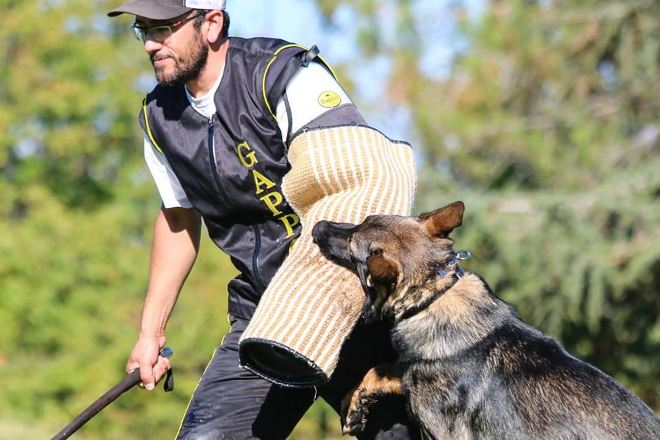 مربی سگ نگهبان